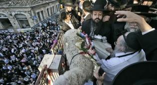 פטר חמור בירושלים. צילום: פלאש 90 - מצוות פדיון פטר חמור  ● תמונות